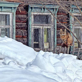 Russia winter cat old traditional log house by Tatiana Bogracheva