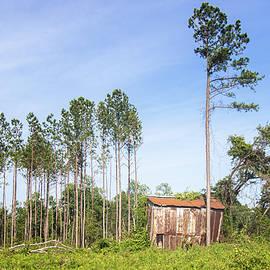 Rusted Metal Tobacco Barn - Onslow County North Carolina by Bob Decker