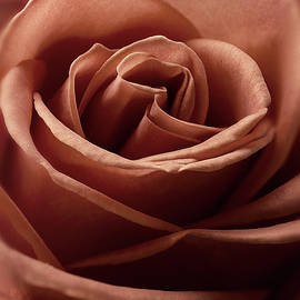 Rustic Rose by John Rogers