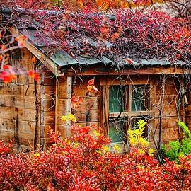 Rustic Shed by KaFra Art