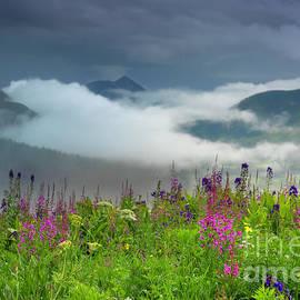 Rustler Gulch Wildflowers by Priscilla Burgers