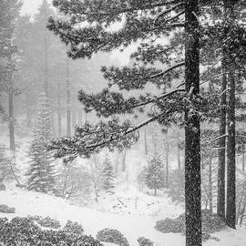 Let it Snow by Maria Coulson