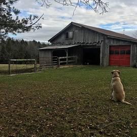 Sadie The Farm Dog . by Jeffrey Koss