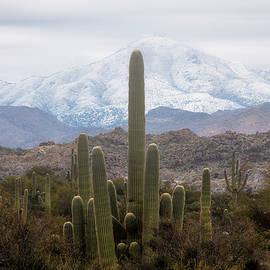 Saguaro And Snow  by Saija Lehtonen