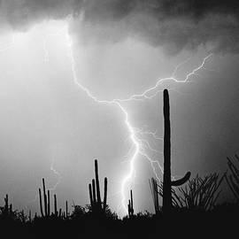 Saguaro Lightning Monochrome - Square by Douglas Taylor