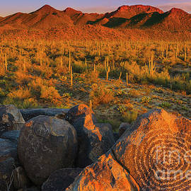 Saguaro National Park by Henk Meijer Photography