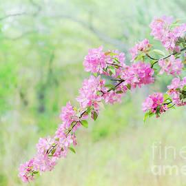 Sakura blossom by Helen Filatova