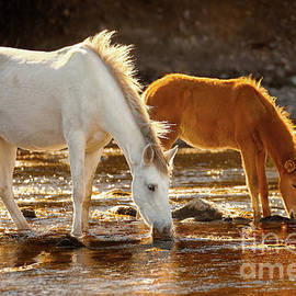 Salt River Colt And Mare by Jerry Cowart