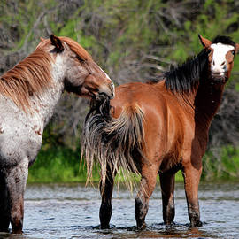 Salt River Wild Horses Hanging Out by Barbara Sophia Travels