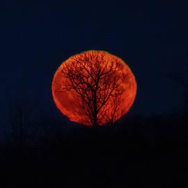 Samhain Moon and Tree