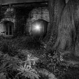 San Antonio Riverwalk Tree and Windows Black and White by Judy Vincent