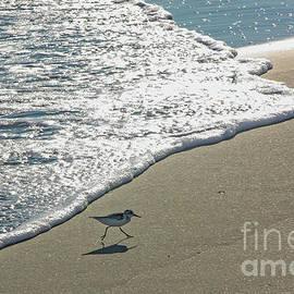 Sanderling and Ocean Waves by Kevin McCarthy