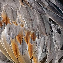 Sandhill Crane Feather Detail 1 by Steven Ralser