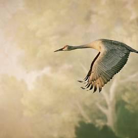 Sandhill Crane in Flight by Flying Z Photography by Zayne Diamond