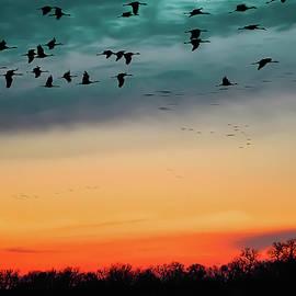 Sandhill Cranes by Emily Kent
