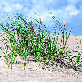 Sands and Grasses of Jockey's Ridge 2011 by Greg Reed