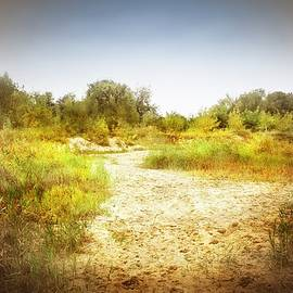 Sandy Path Leading to the River Bank by Slawek Aniol