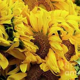 Santa Fe Railroad Farmers Market Sunflowers by Bob Phillips