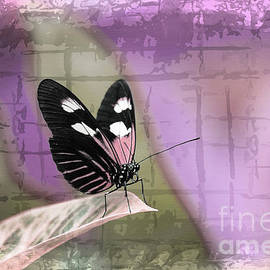 Sapho Longwing Butterfly Purple Abstract by Sharon McConnell