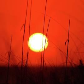 Sarasota Sun by DJ Florek