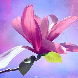 Saucer Magnolia by Christina Ford
