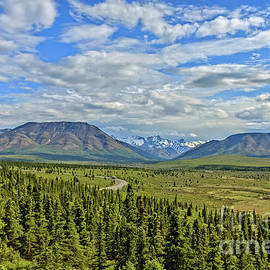 Savage River Valley View by Robert Bales
