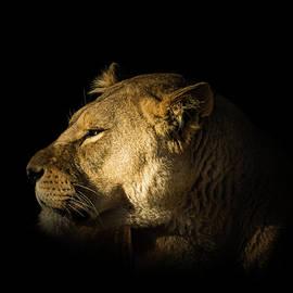 Savanah Queen by Richard Sayer