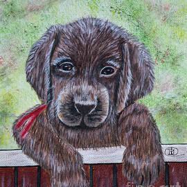 Sawyer, Man's Best Friend by Deborah Klubertanz