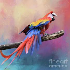 Scarlet Macaw by Kathy Kelly