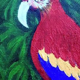 Scarlett Macaw by Debi Rogers
