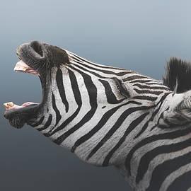 Screaming Zebra by Melanie Delamare