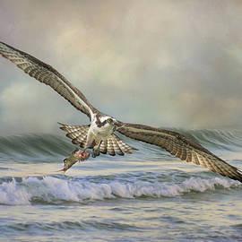 Sea Eagle by Jai Johnson
