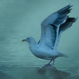 Sea Gull by Richard Smith