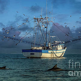Sea Life for Dolphins by RC- Photography LLC