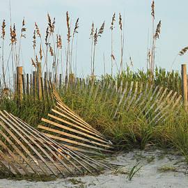 Sea Oats and Sand Fence by Donna Kaluzniak