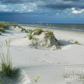 Sea Oats and Sand by Tina M Powell