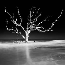 Sea Tree by Ryan Johnson