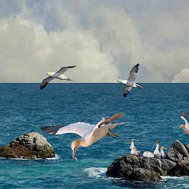 Seabirds Homcecoming by Spadecaller