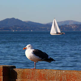 Seagull and a sailor in San Francisco bay by Farzad Frames