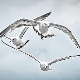 Seagull Wind Surfers by Zayne Diamond Photographic