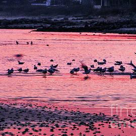 Seagulls at Dawn by Kim Lessel