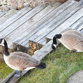 Searching for a nesting place by Barbara Ebeling