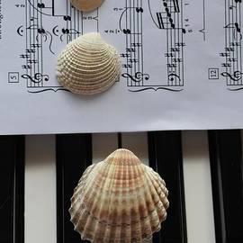 Seashells Dream On The Piano by Leonida Arte