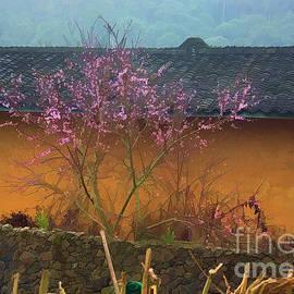 Seasons Spring Vietnam  by Chuck Kuhn