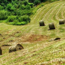 Second Cutting Hay Bales  by Thomas R Fletcher