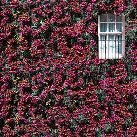 Secret Window II by Arro FineArt