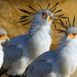 Secretary Birds By The River In Kenya by R christopher Vest