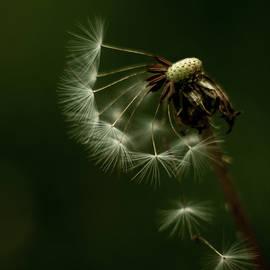 Seedy Cascade by Tim Beebe