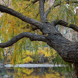 Seeing Autumn by Sue Cullumber