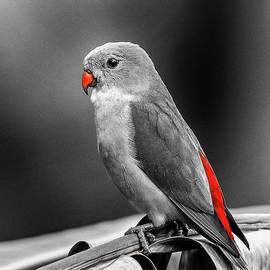 Selective Color Parrot by Teresa Trotter